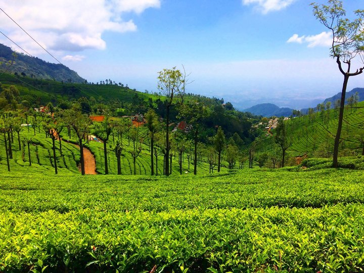 South India Hill Station - Tour