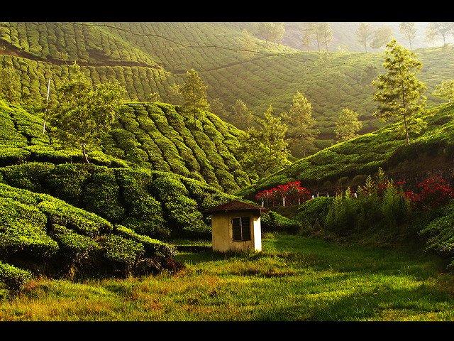 8N/9D B2B Kerala Trip - Tour