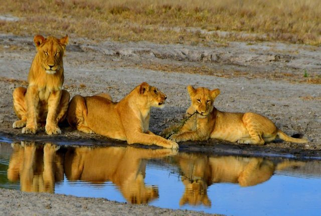 Tanzania Safaris & Kilimanjaro Treks - Collection