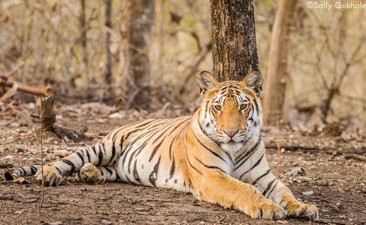PENCH WILDLIFE SAFARI - Tour
