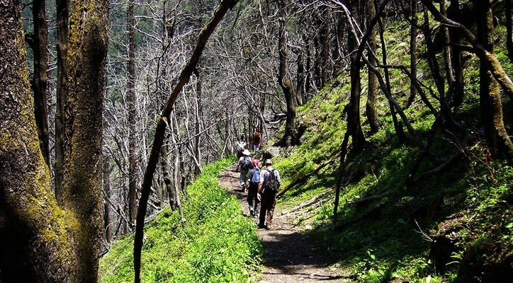 Kauri Pass 8 Days Trek - Tour