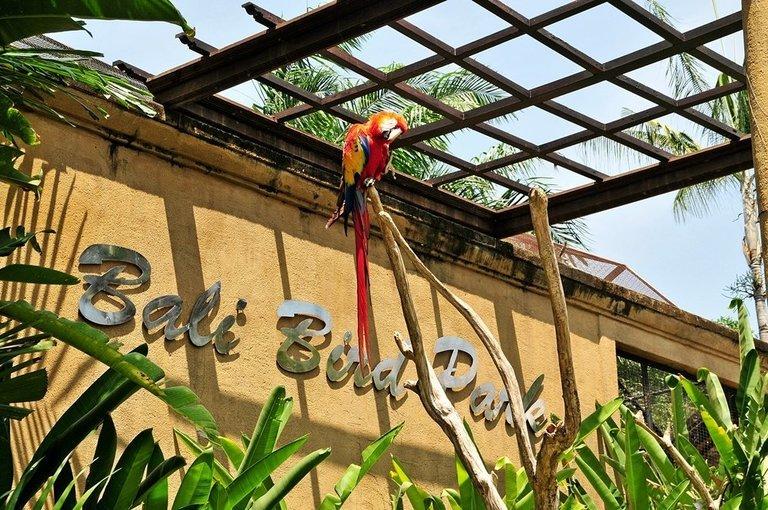 Bali Bird Park Tickets in Bali - Tour