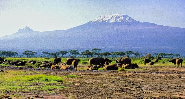 Trekking Expedition to Mt.Kilimanjaro - Tour