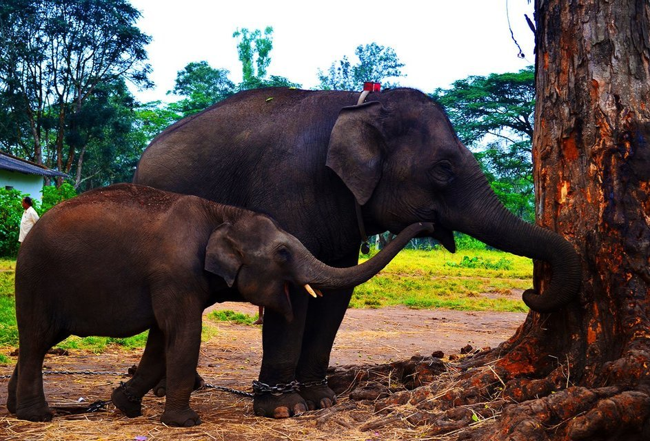 Dubare Elephant Camp - Coorg - Tour