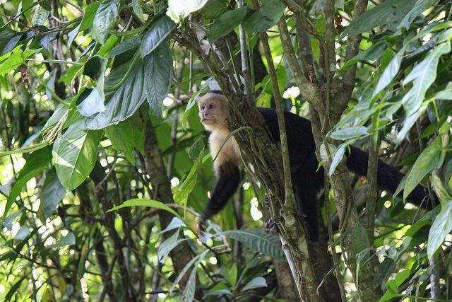 Monkey Viewing - Tour