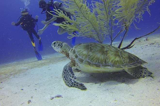 Scuba Diving in Goa for Non Swimmers - Collection
