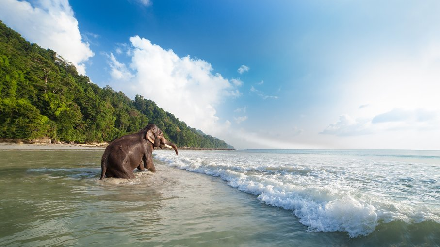 Azure Andaman W/ Flights Ex. BLR - Tour