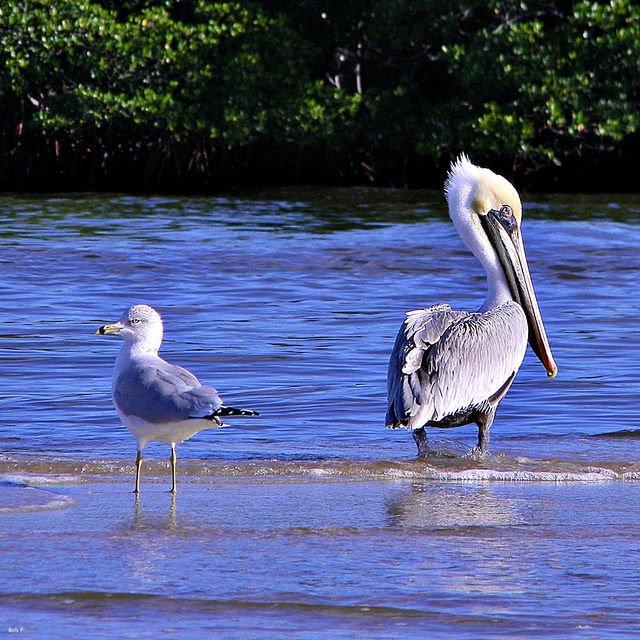 CROCODILE & BIRDS WATCHING - Tour