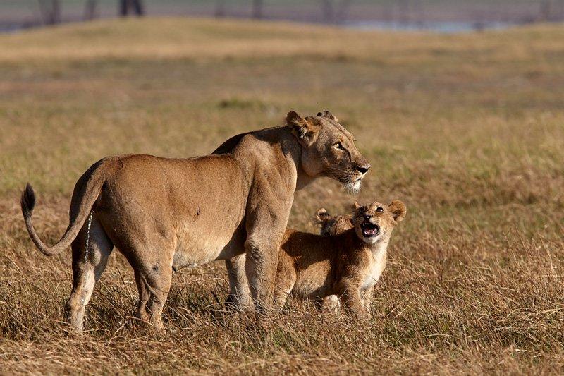 Konkamoya & Ila Lodge   Kafue National Park Safaris - Tour