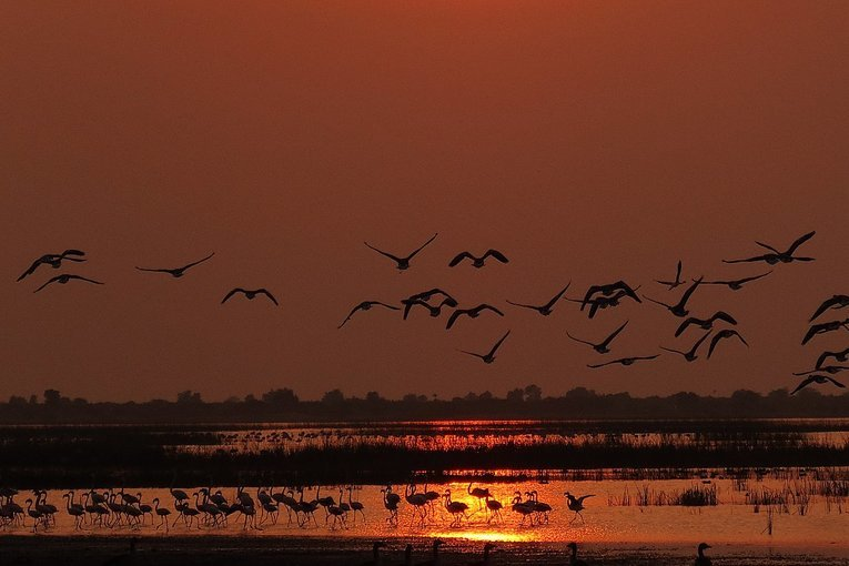 Rann of Kutch (Multifaceted) - Tour