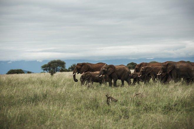 Herd_of_elephant.jpeg - description