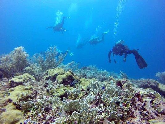 Scuba Diving Experience - All Levels - Tour