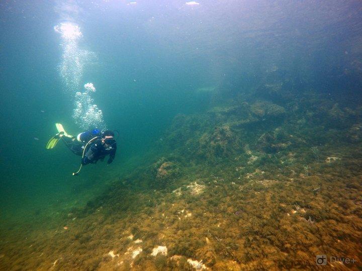 Dive DDI - Certified Divers - Tour