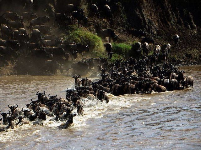 The Great Migration Safaris... - Collection