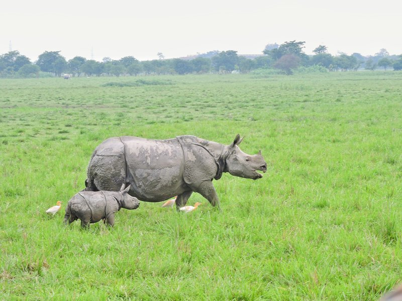 Meghalaya with Kaziranga Holiday - Tour