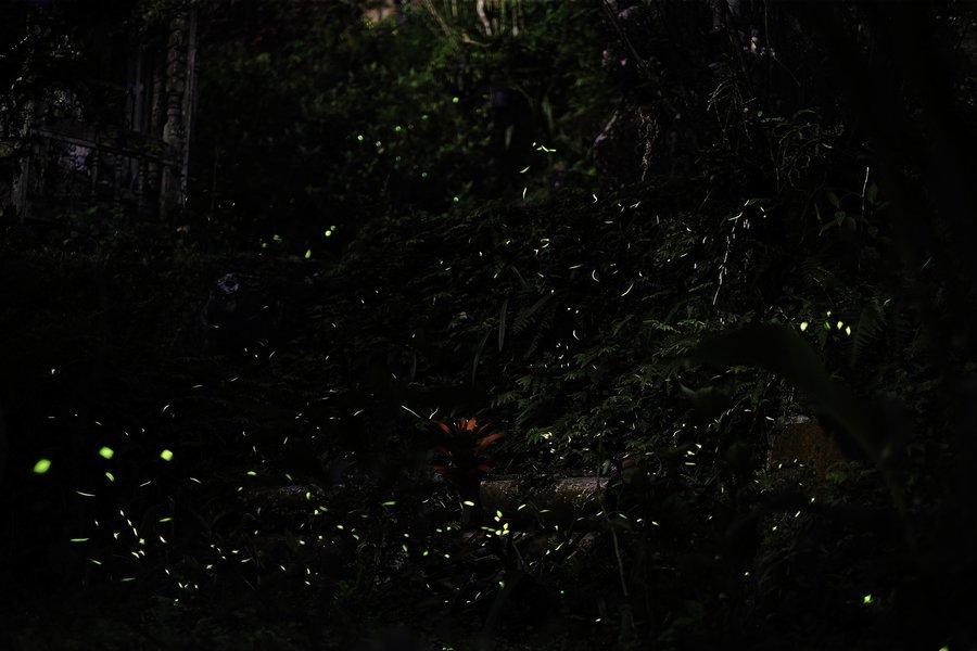 Kondana Caves Fireflies Trek - Tour