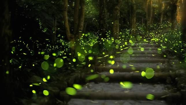 Rajmachi Fireflies Trek | Fireflies near Mumbai Pune - Tour