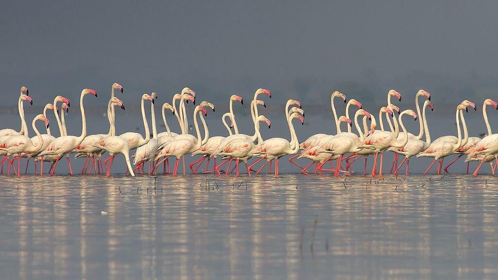 Bhigwan Bird Photography Tour and Mayureshwar Wildlife Sanctuary - Tour
