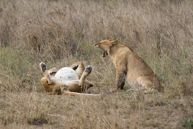 2 Days Serengeti Safari from Mwanza - Tour