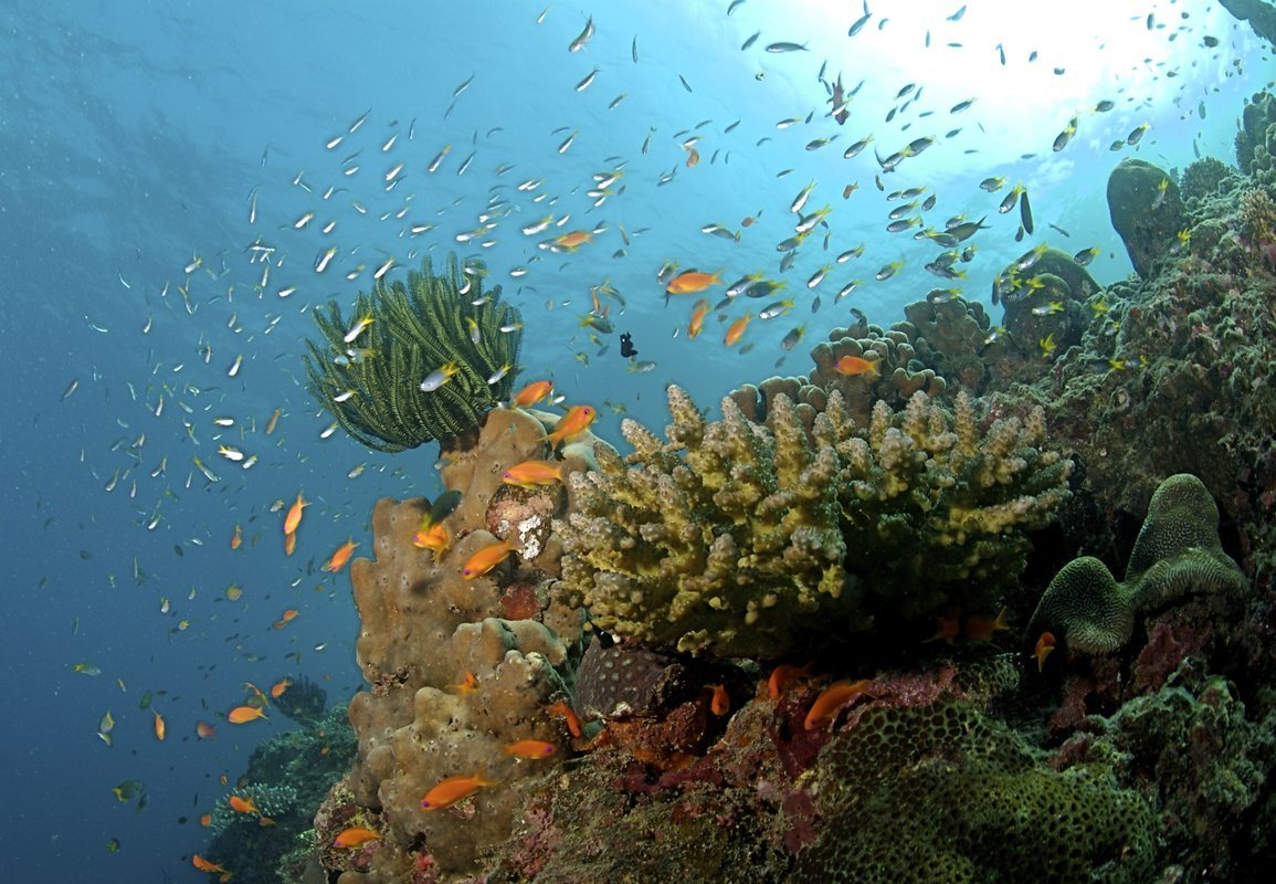 Andaman Tours & Holidays - Collection
