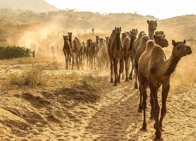 Jaisalmer NYE - Tour