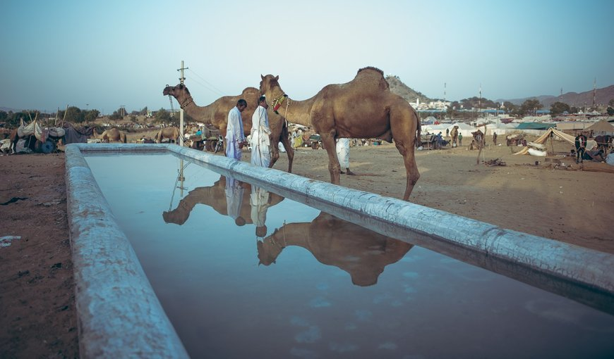 Photography Special Tour to Pushkar - Tour