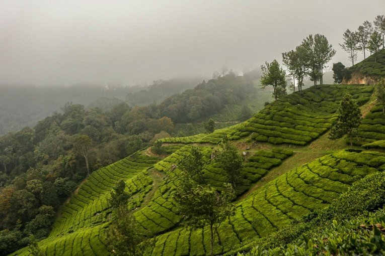 Top Station Trek - Munnar - Tour
