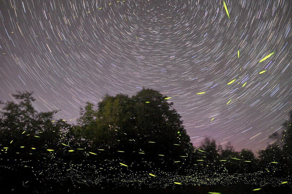 Fireflies Event Maharashtra 2019 - Collection