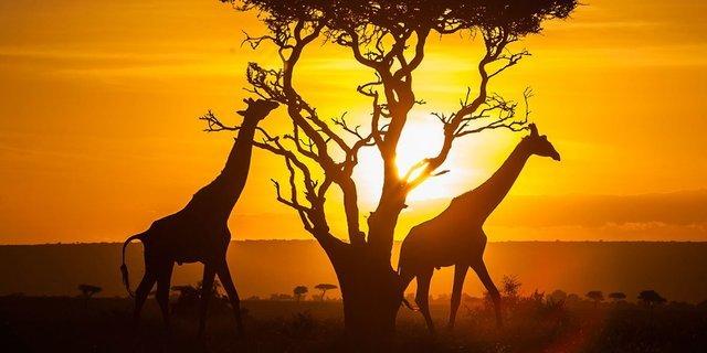 Kenya Tanzania... - Collection