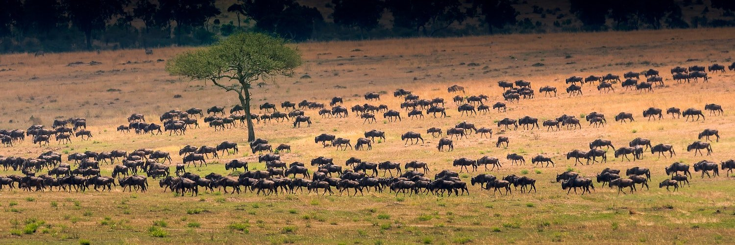 The Great Migration Safari - Mating Season, May to June - Tour