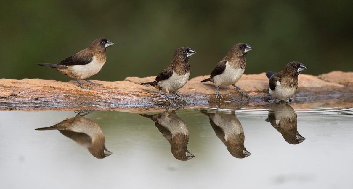 Bird watching Safari in Tanzania - Tour