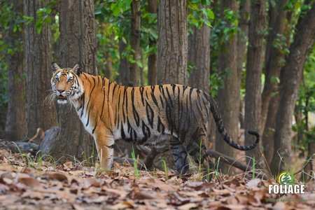 Bandhavgarh Wildlife Camp