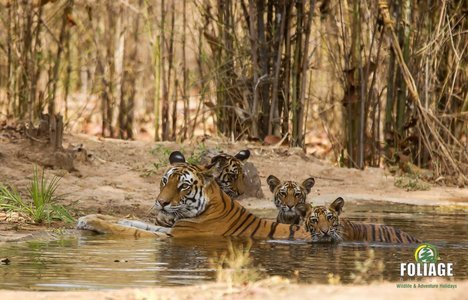 Bandhavgarh Wildlife Camp (18-22 years)