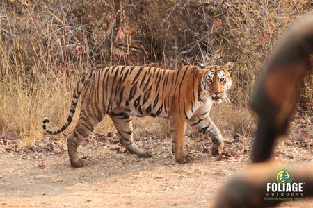 Tadoba Wildlife Camp (18-22 years)