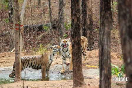 Pench Wildlife Camp (18-22 years)