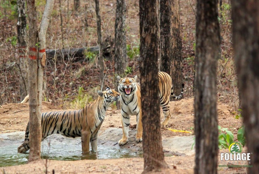 Pench Wildlife Camp (18-22 years) - Tour
