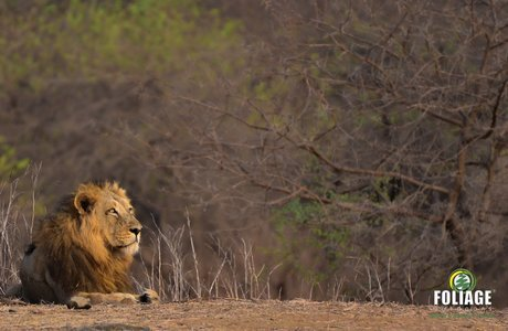 Gir Wildlife Camp