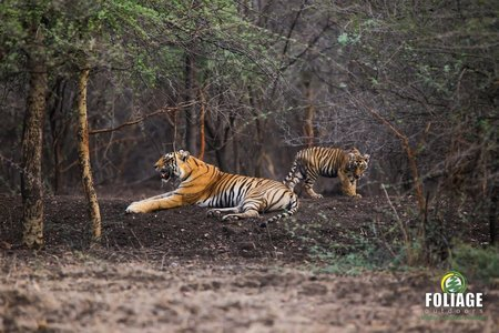 Ranthambhore Wildlife Camp (18-22 years)
