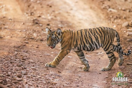 Ranthambhore Wildlife Camp (By Flight)