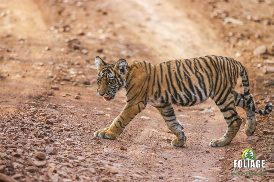 Ranthambhore Wildlife Camp - By Air - Tour