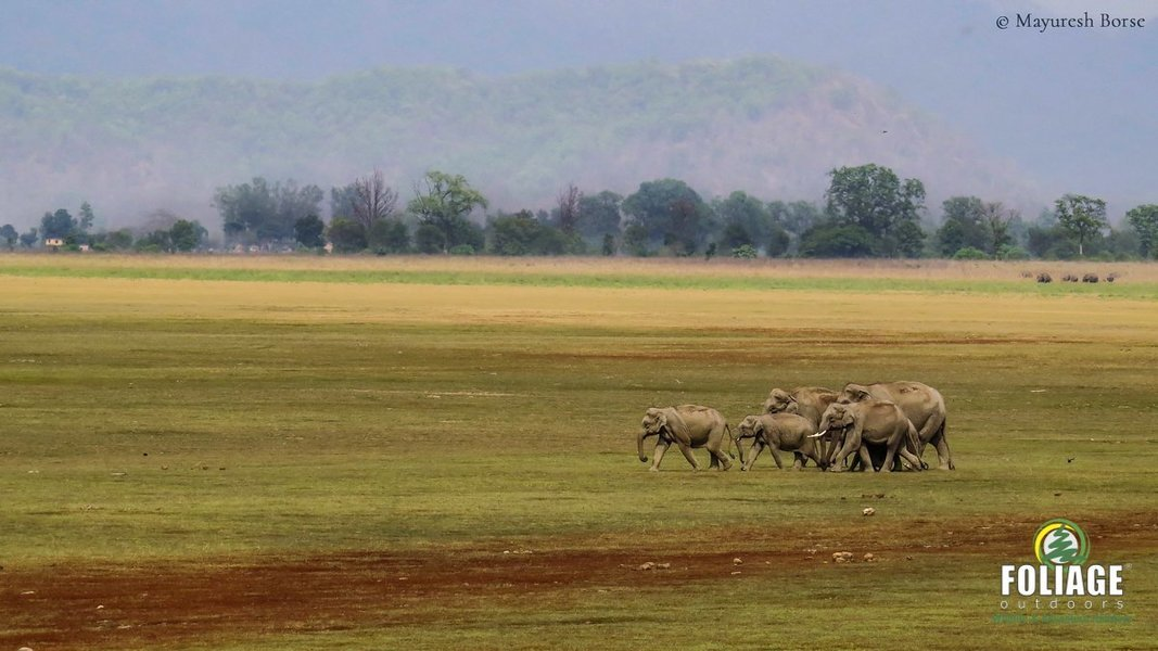 Corbett Wildlife Camp - Tour