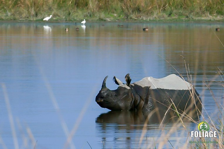 Kaziranga Wildlife Camp - Tour