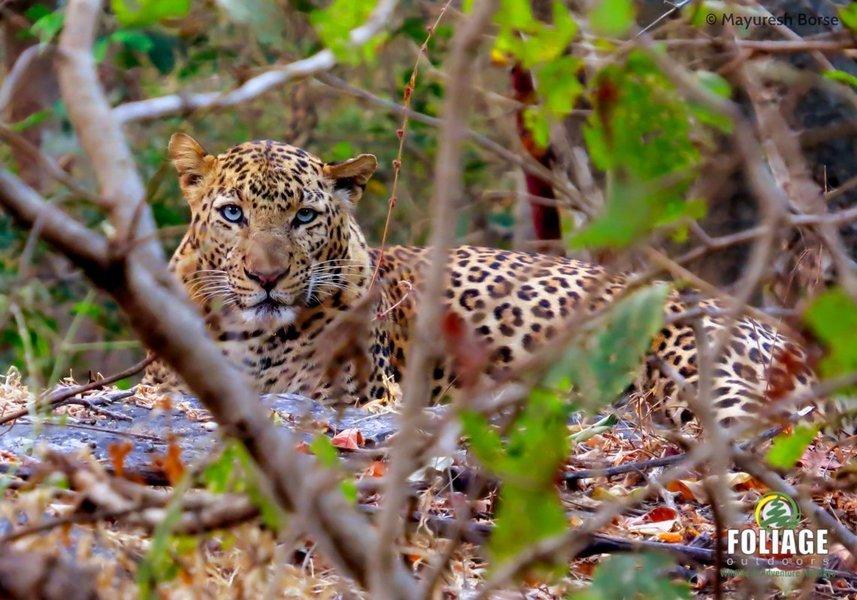 Nagzira Wildlife Camp - Tour