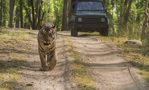 Tour to Tadoba National Park
