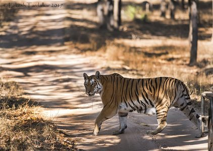 Tour to Pench Tiger Reserve