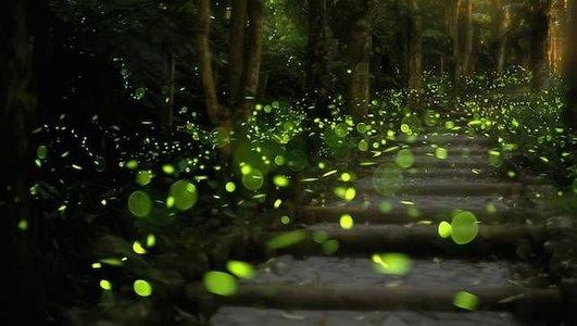 Fireflies Night Trek to Prabalmachi