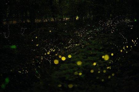 Fireflies Night Trek to Kothaligad (Peth)