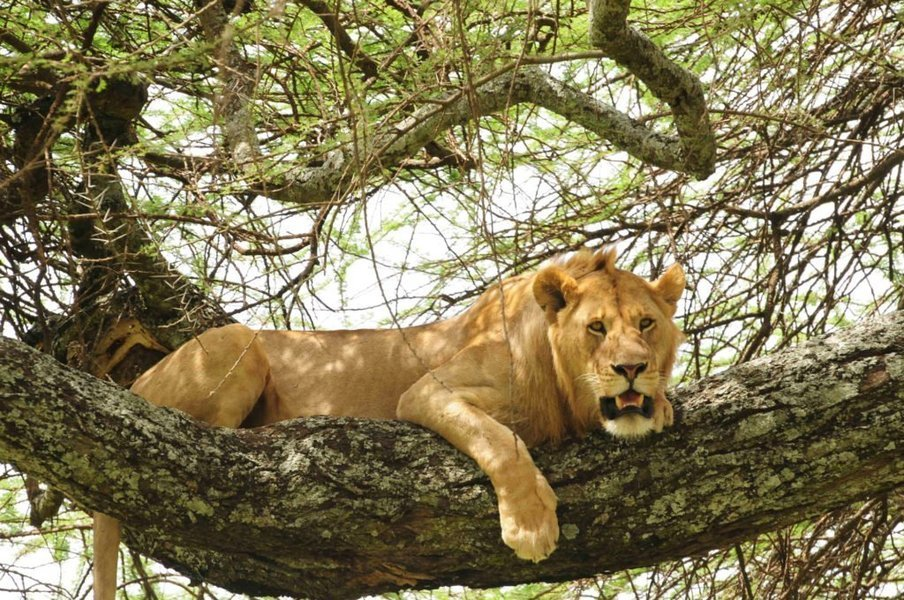 Best of Tanzania Safari - Tour