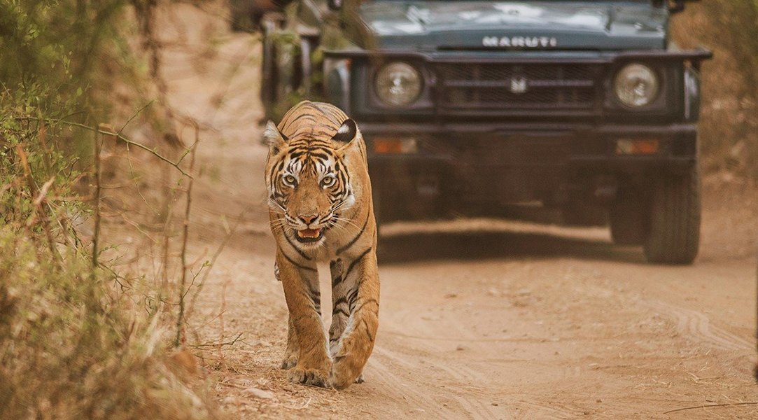 Wildlife Safaris - Collection