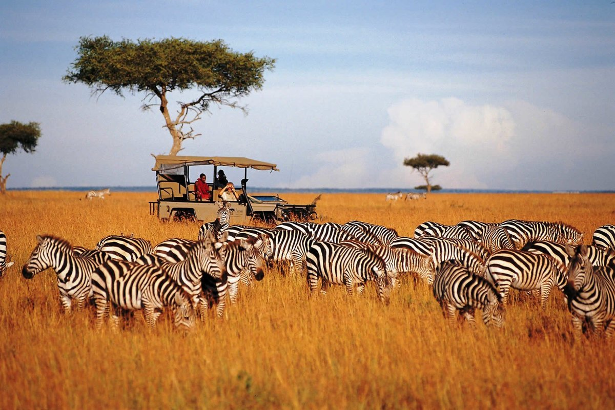 Wildlife & Safaris Holidays - Collection